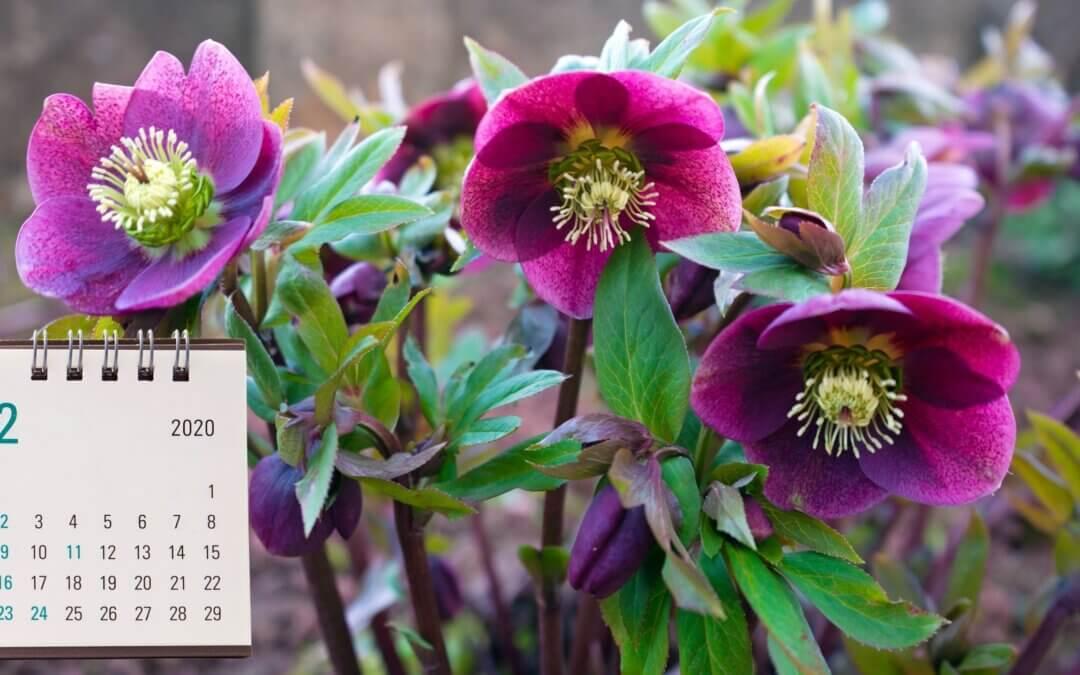 Zahradní kalendář – hnědobílý únor