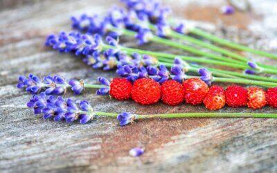 Kalendář šťastné zahradnice – plodný červen