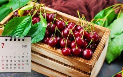 Kalendář šťastné zahradnice – slunečný červenec