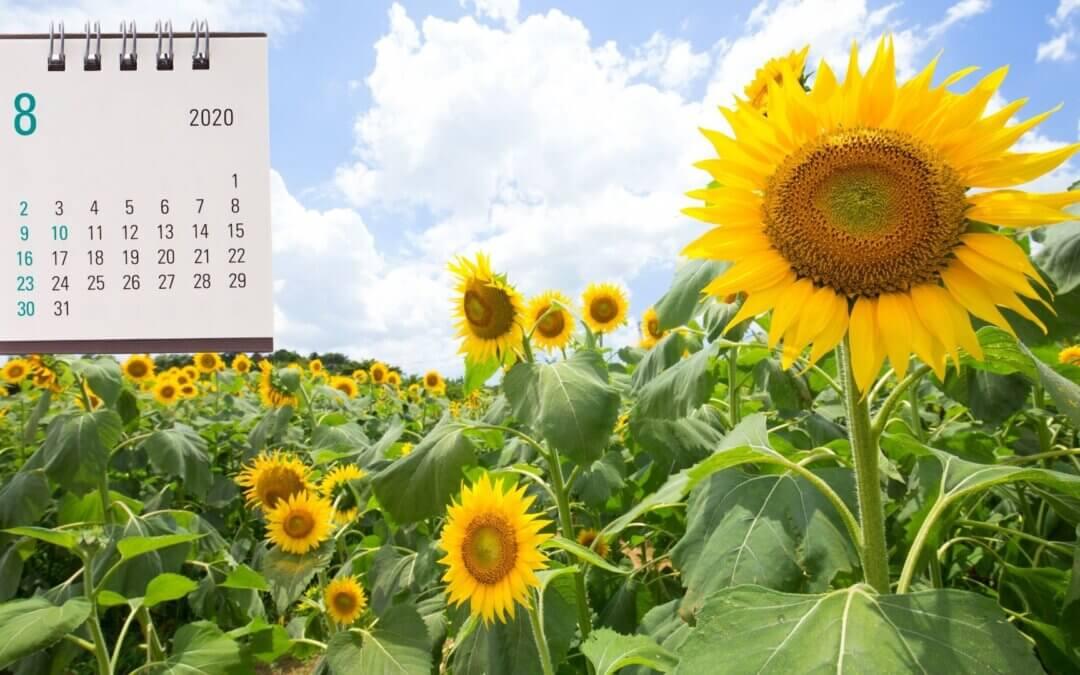 Kalendář šťastné zahradnice – zlatavý srpen